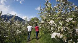 Primavera in Trentino Alto Adige