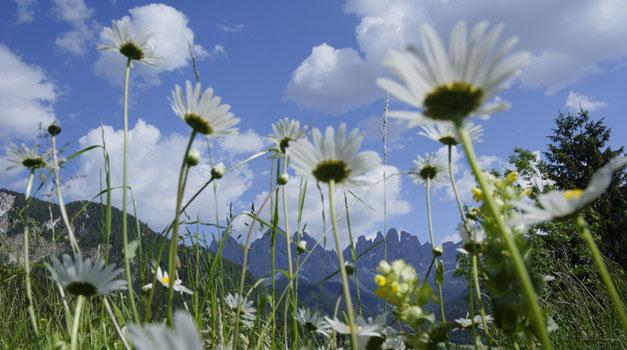 Vacanze in un maso di montagna in Alto Adige - agriturismo - Gallo Rosso