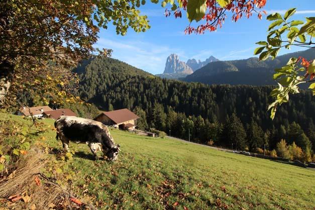 recensioni - Tiscion - Ortisei - Agriturismo in Alto Adige - Dolomiti